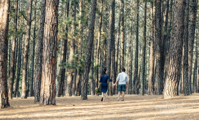 sloane pine forest e-shoot (17)