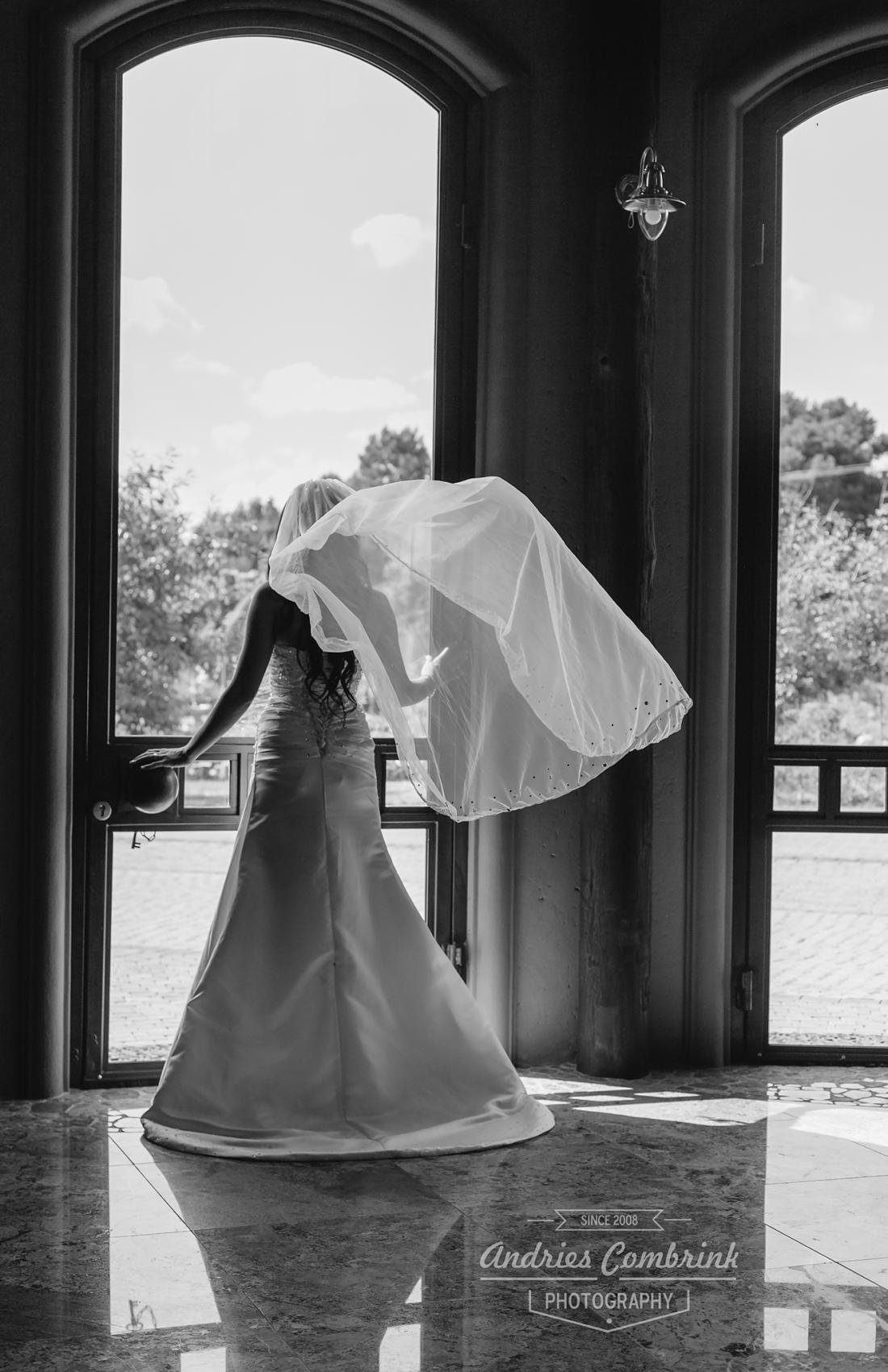 galagos+veil