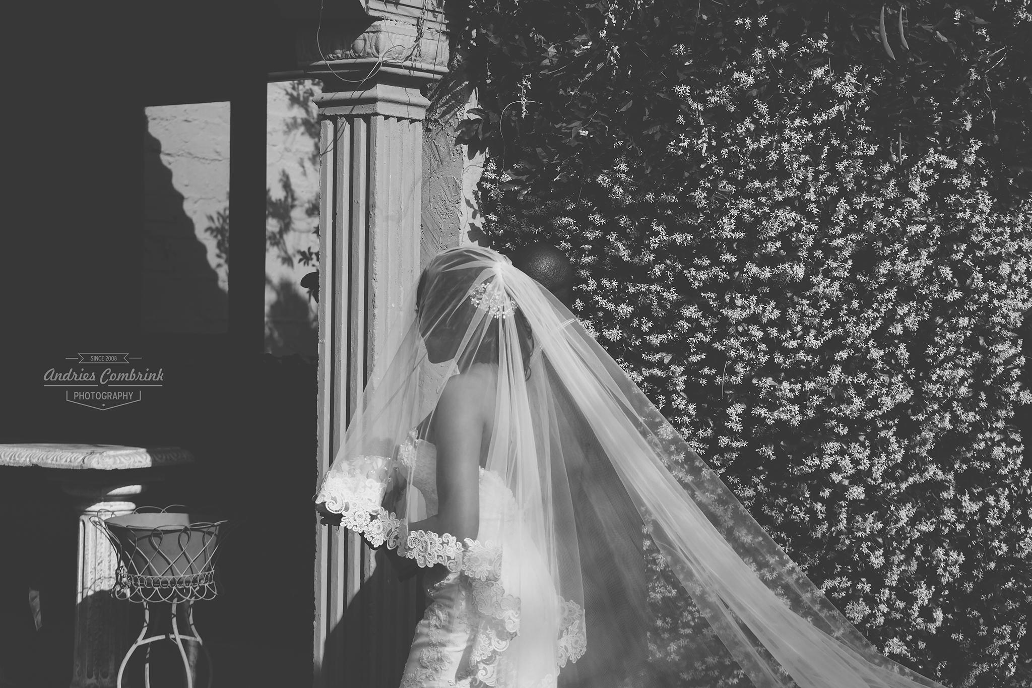 oakfield farm bride+veil
